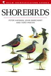 Shorebirds by John Marchant