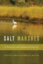 Salt Marshes by Carol Butler