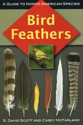 Bird Feathers by S. David Scott